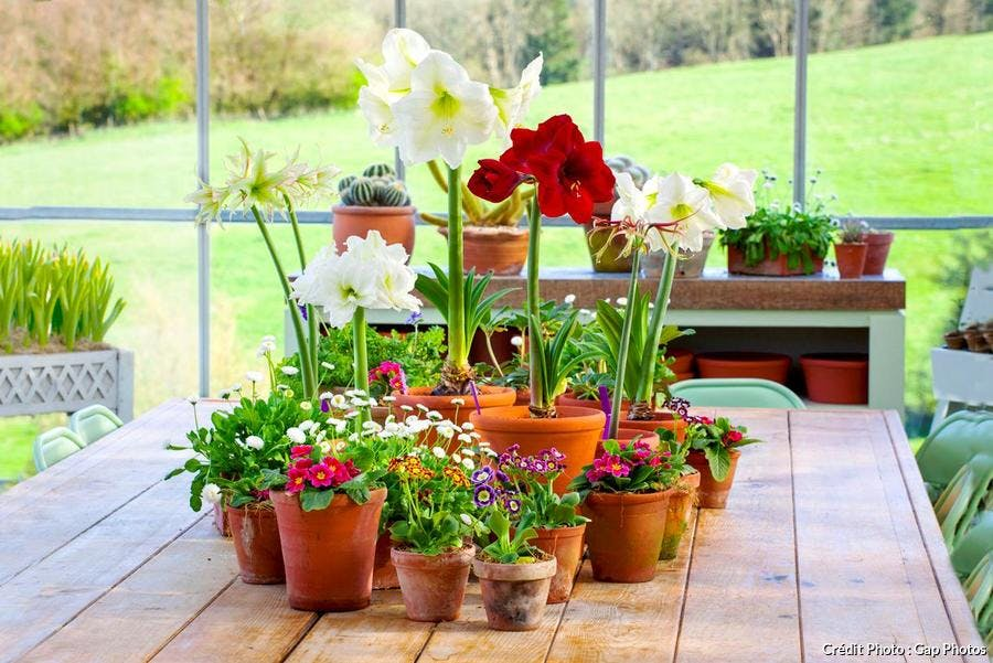 Comment faire refleurir ses plantes d'intérieur