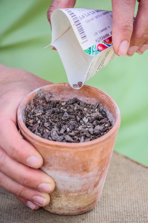 semer pois de senteur