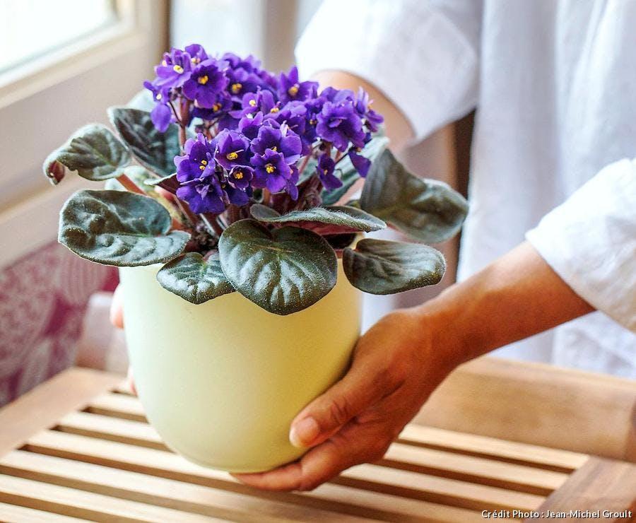 L'exposition des plantes d'intérieur