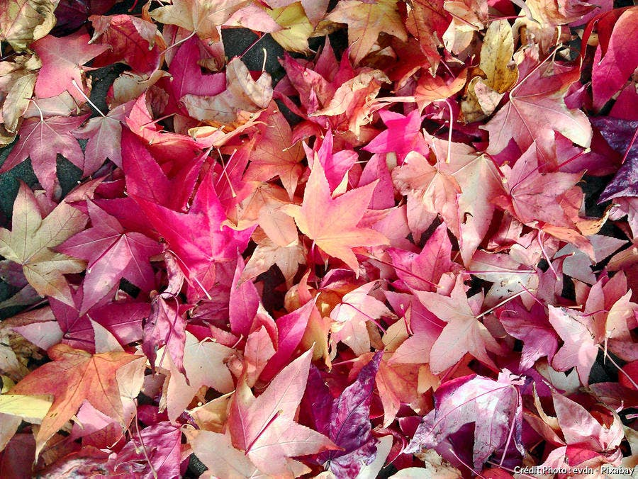 feuilles automne mortes