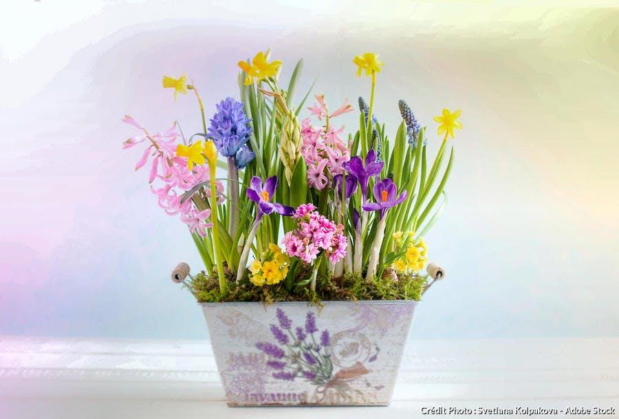 Pot jacinthe narcisse muscaris jardinière