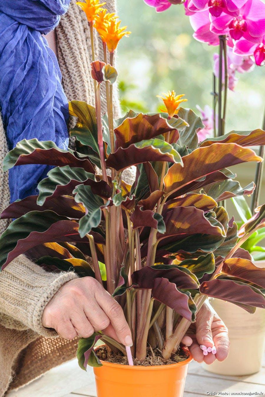 engrais plante d'intérieur