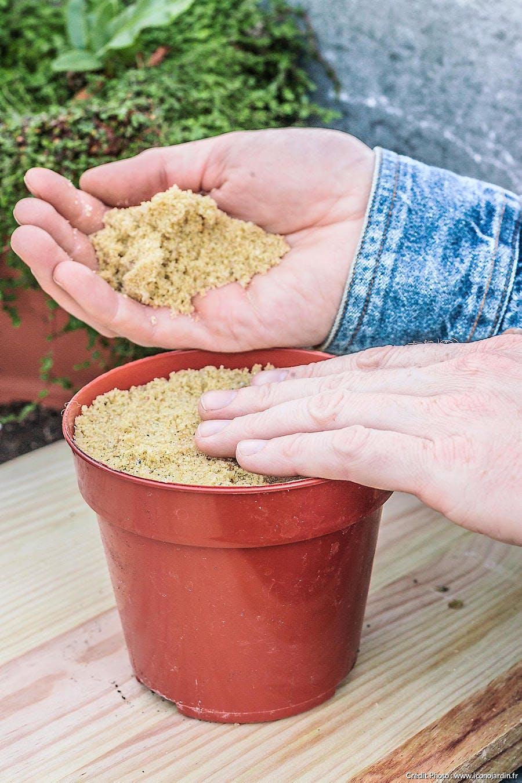 tasser la terre des semis