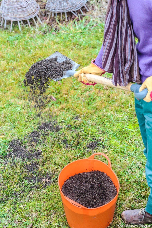 enrichir la pelouse pour éviter la mousse