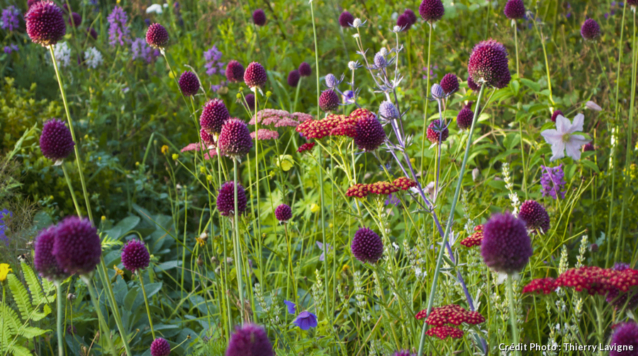 Mélanger les bulbes et les plantes vivaces