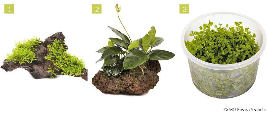 Les plantes pour les débutants en aquascaping