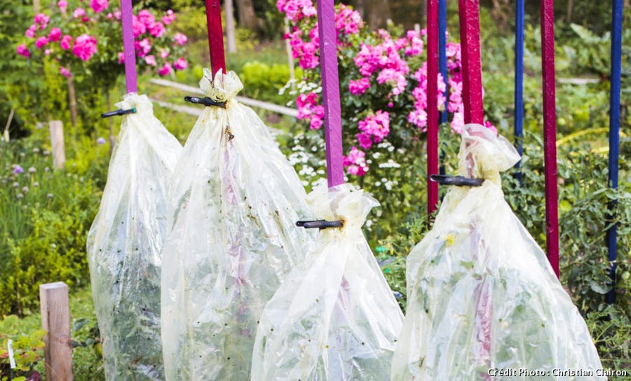 Jupes de plastique pour protéger les pieds de tomates
