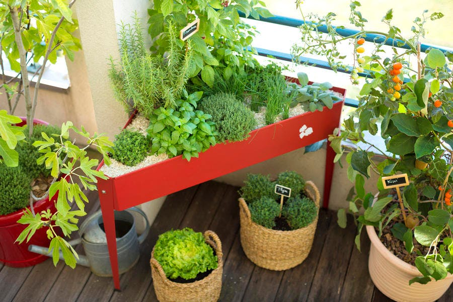botanic_-_c_botanic_-_arnaud_childeric_6.jpg