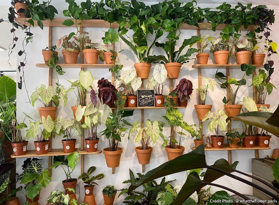 Boutique plantes Paris