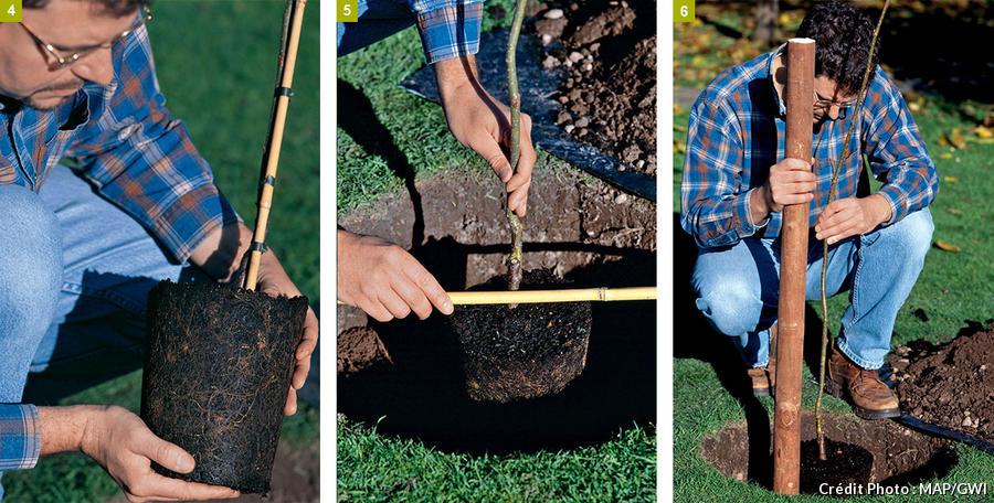 Les étapes de la plantation d'un arbre
