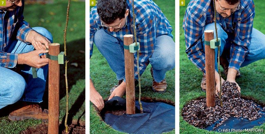 Les étapes pour planter un arbre