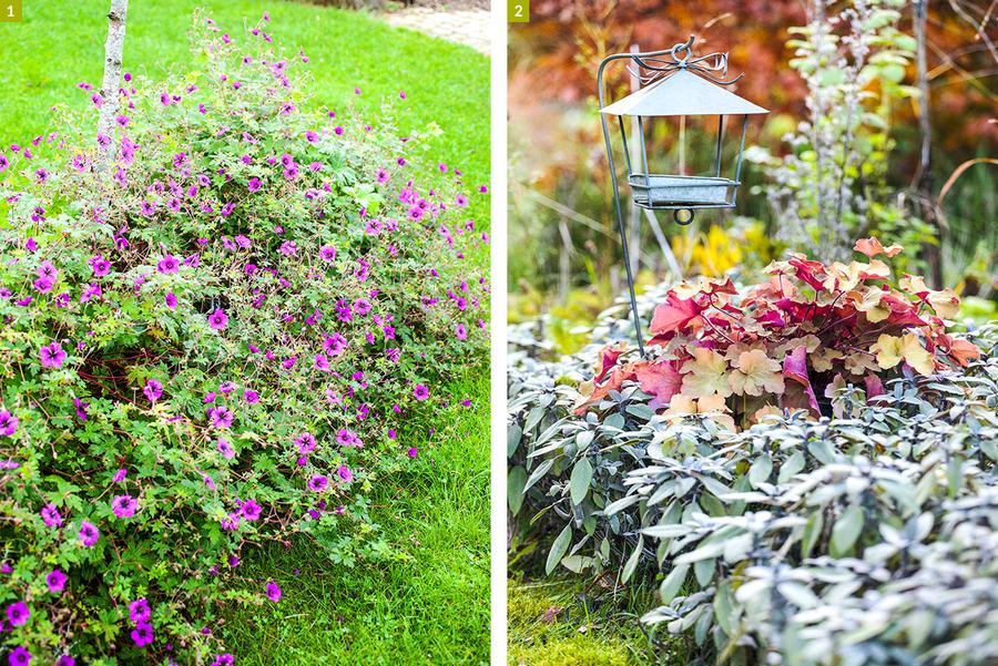 dj-121-geranium-vivaces-et-fueillages-colores.jpg