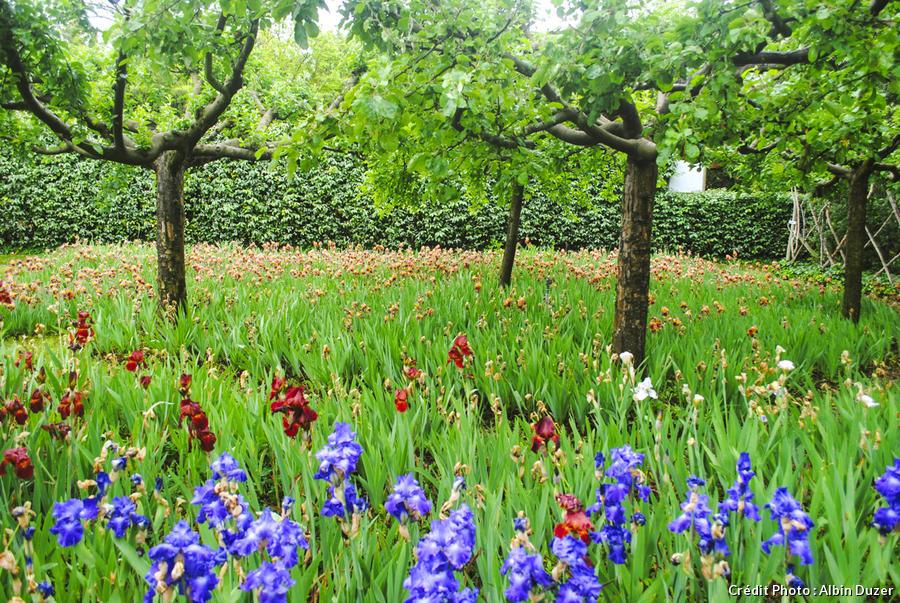 dj-121-jardin-de-lalchimiste-albin-duzer.jpg