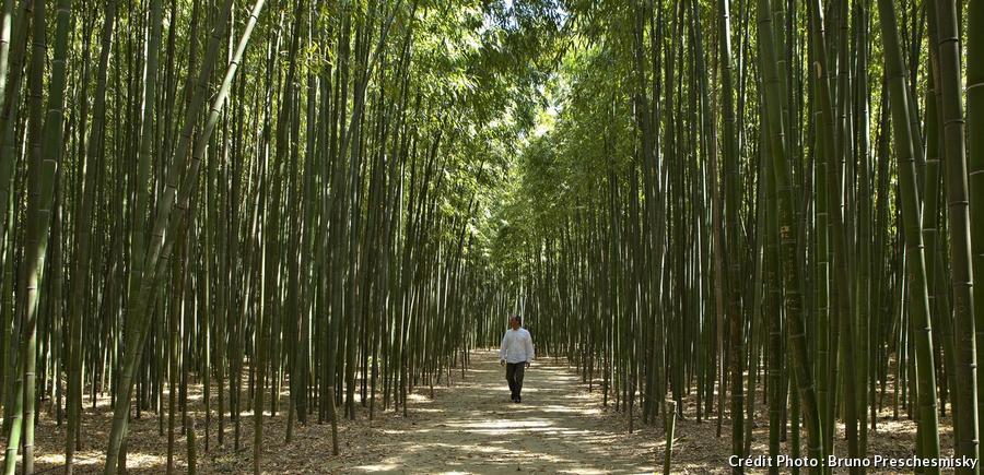 Bambouseraie en Cévennes