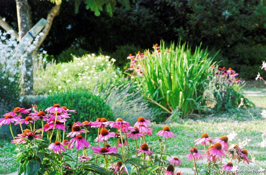 dj-jardin-bord-de-mer-echinacees-suppl119.jpg