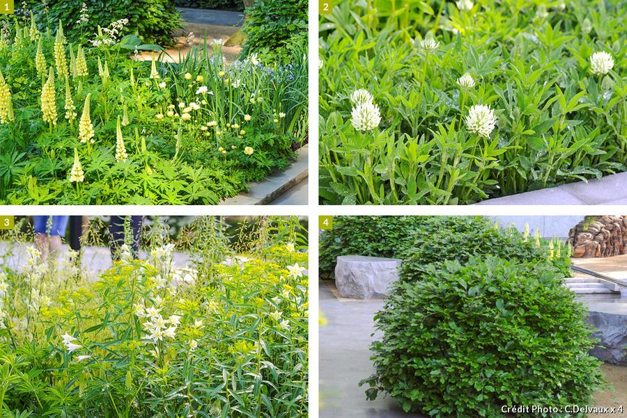 dj-jardin-contemplatif-suppl119-plantes-cles.jpg