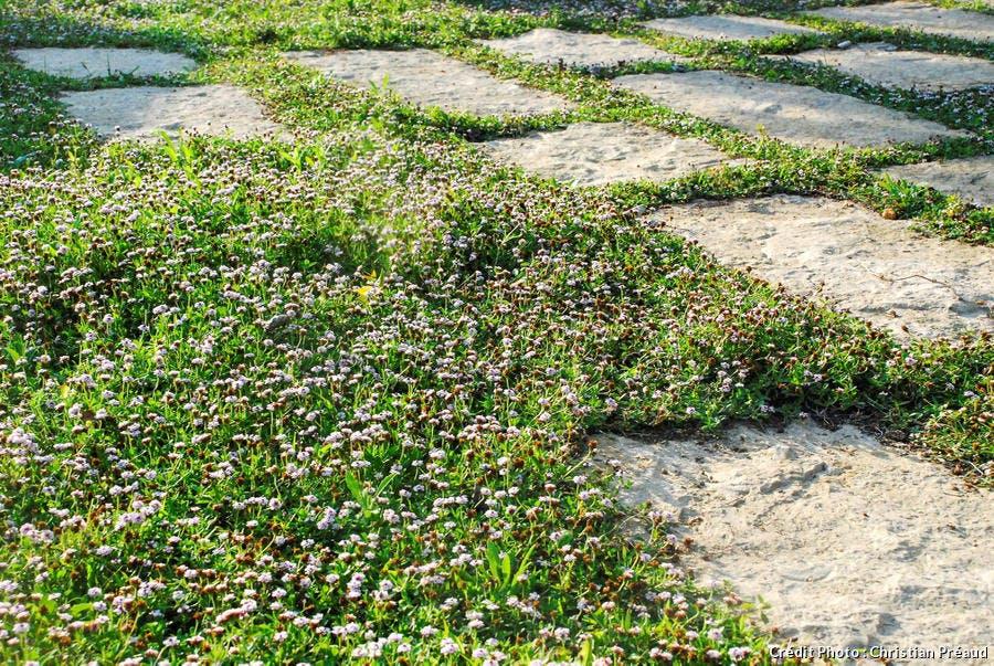 dj-jardin-de-bord-de-mer-couvre-sol-suppl119.jpg