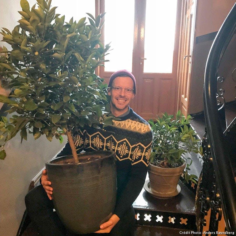 En hiver, Anders le jardinier norvégien place son calamondin à l'abri du froid dans le grenier.
