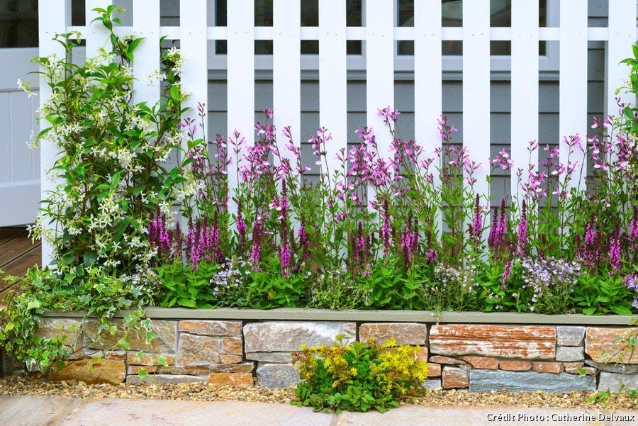 dj-pas-de-porte-fleuri-trachelospermum-suppl119.jpg