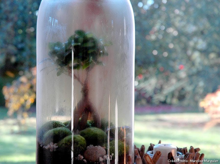 Entretien d'un terrarium humide
