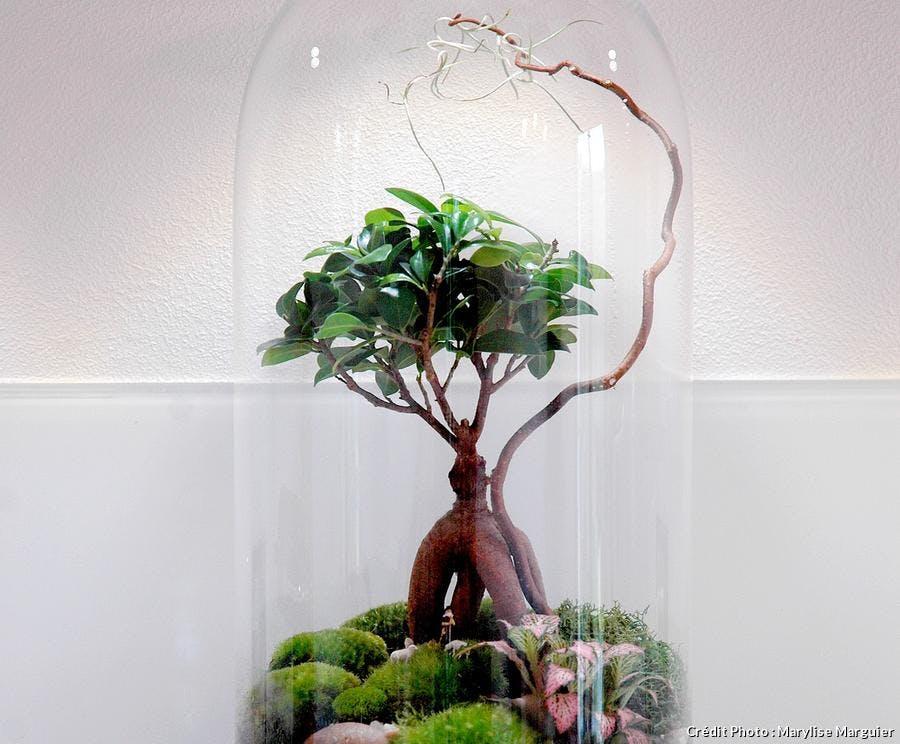 Comment Faire Un Terrarium Humide En 8 Etapes Detente Jardin