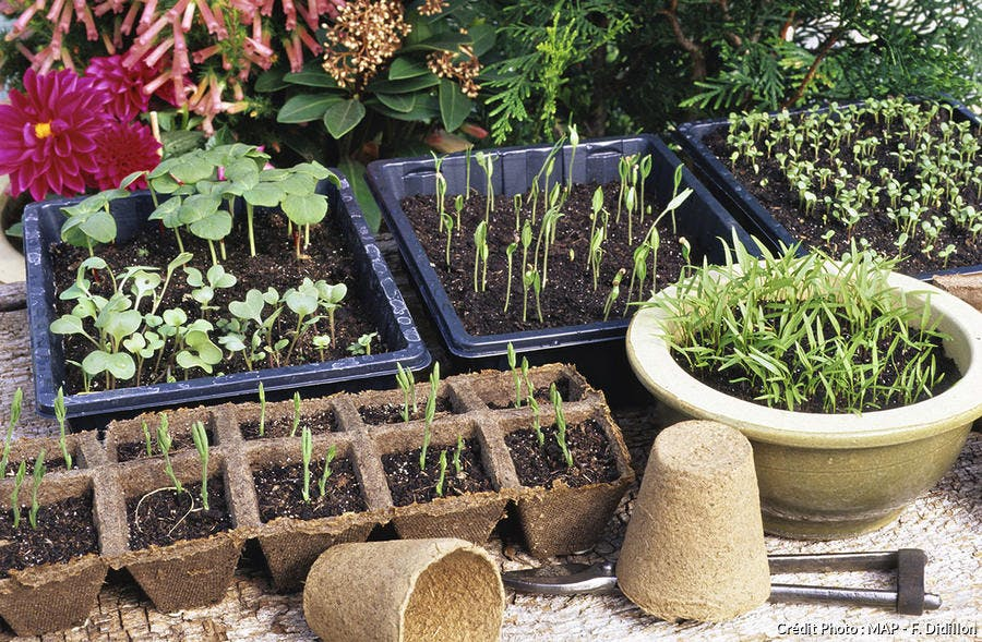 Endurcir les plantes