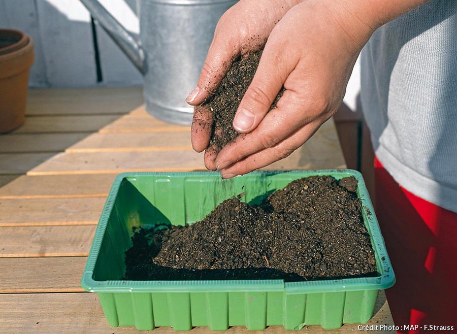 Terreau de semis dans caissette