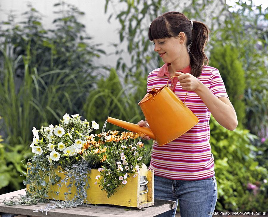 Arrosage des jardinières