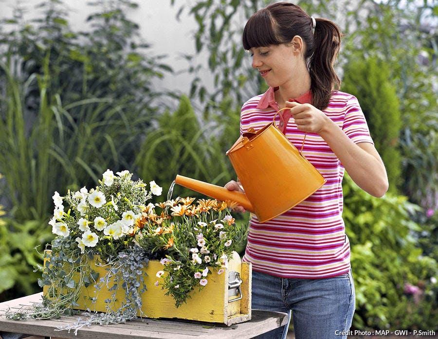 Arrosage de la jardinière