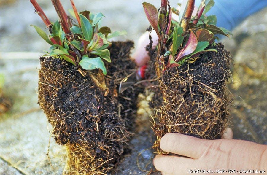 Créer un massif pour 3 fois rien avec des vivaces - Détente Jardin