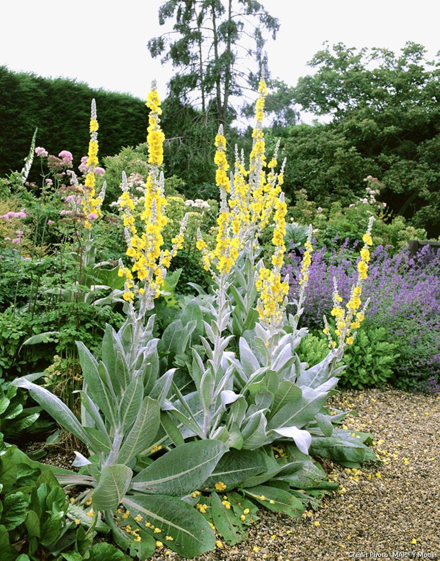 Plante Méditerranéenne Sans Arrosage 10 plantes faciles qui résistent au manque d'eau - détente