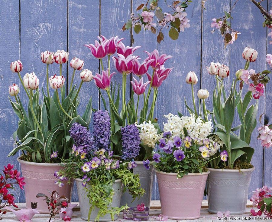 Bulbes De Printemps 5 Idees D Associations En Pot Detente Jardin