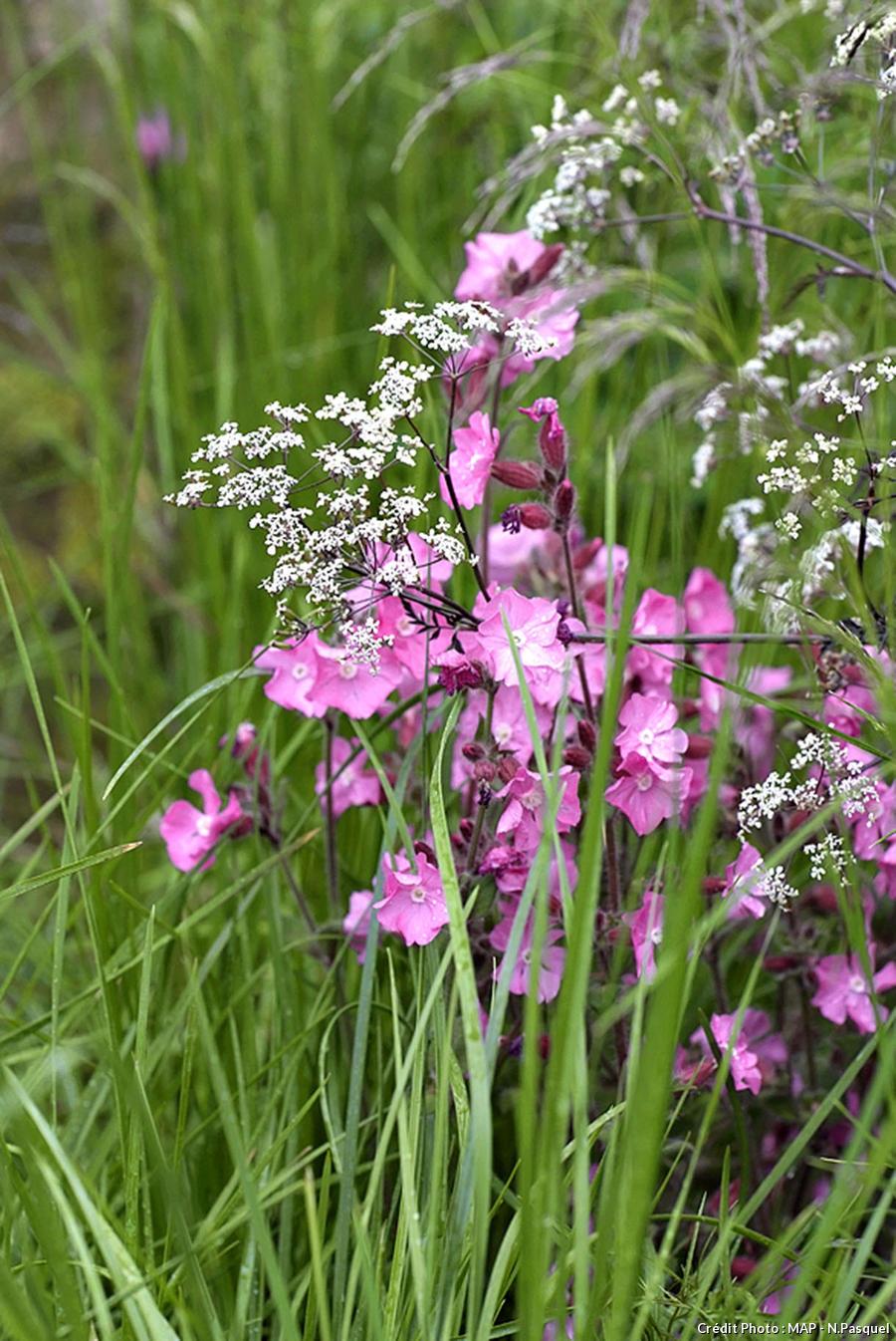 Des fleurs en toute légèreté