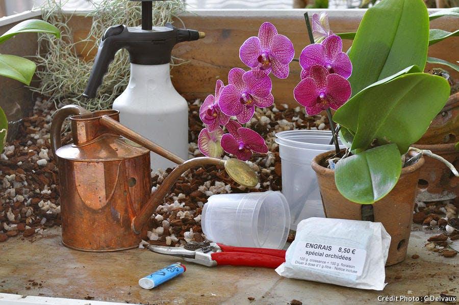 Entretenir les orchidées