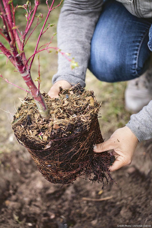 Sortir l'arbuste de son pot