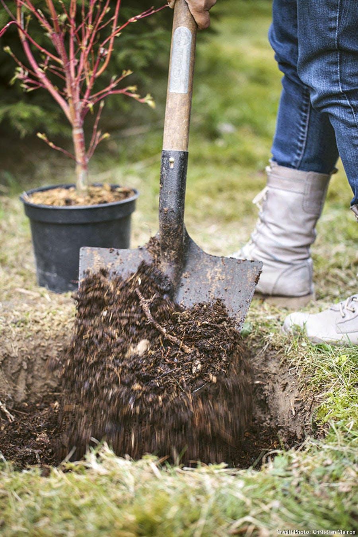 Comment Planter Des Asperges arbuste en pot : comment le planter correctement ? | détente