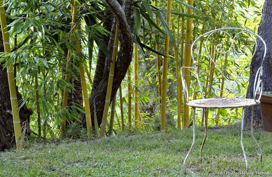 Des bambous géants devant le coin repos.