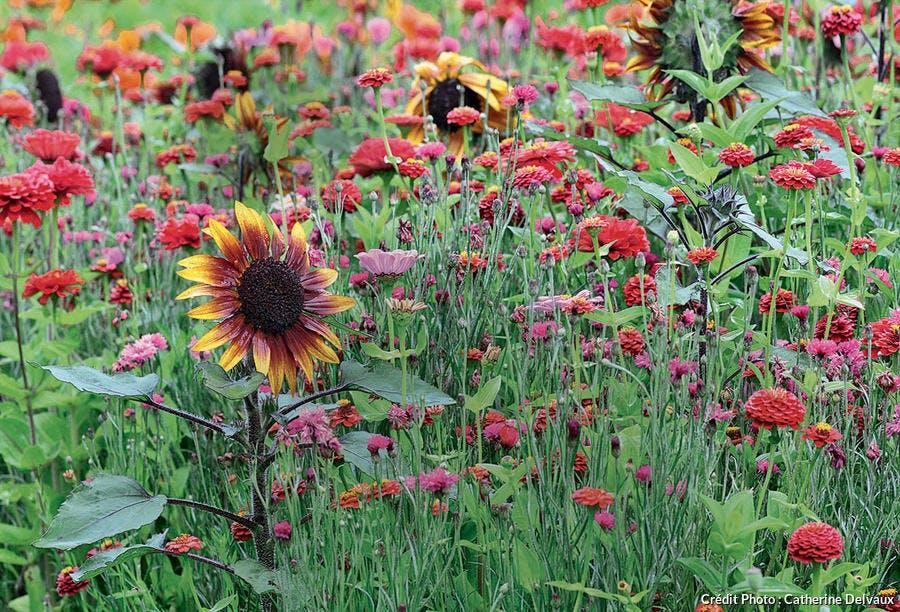 Prairie fleurie - mélange de chez Vilmorin