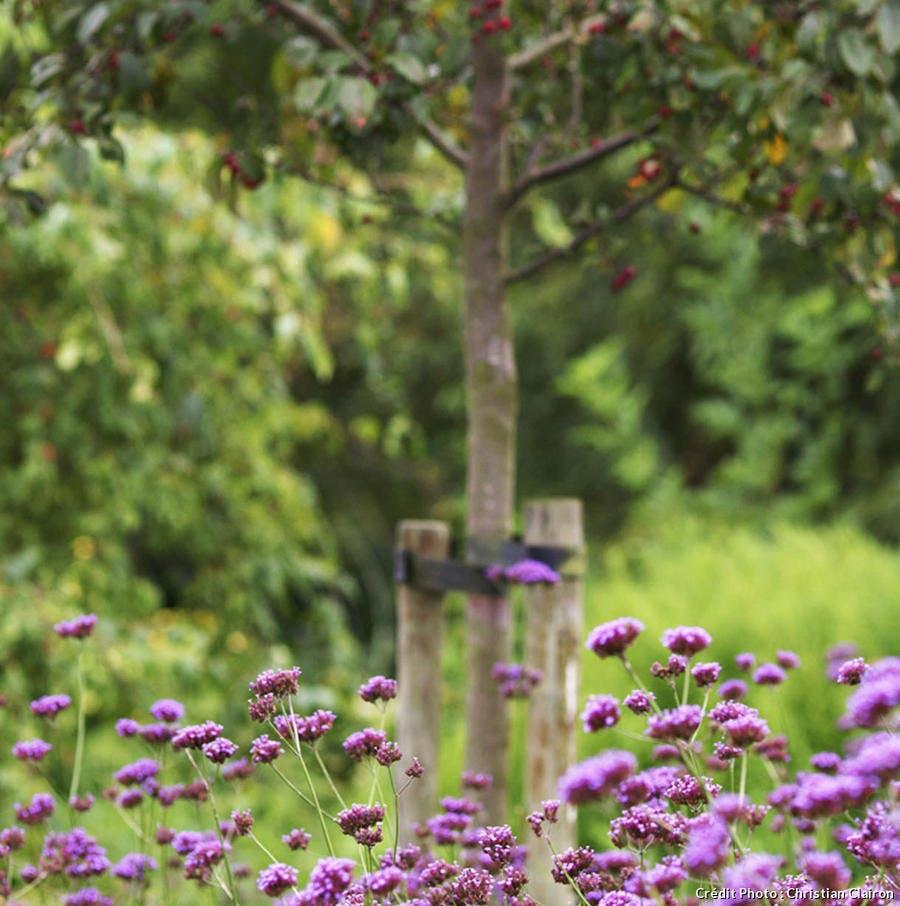 Verger et fleurs