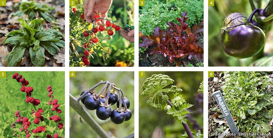 légumes qui se ressèment