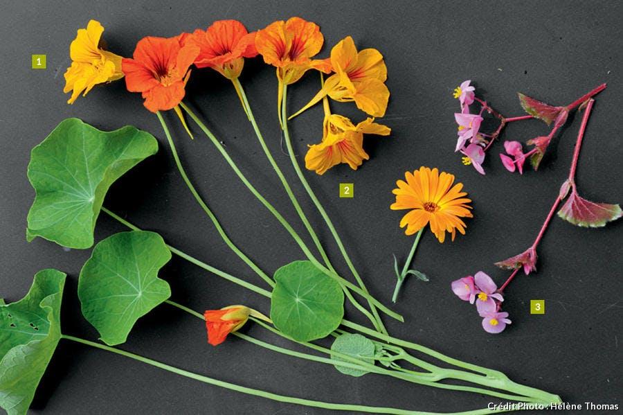 Fleurs colorées à manger