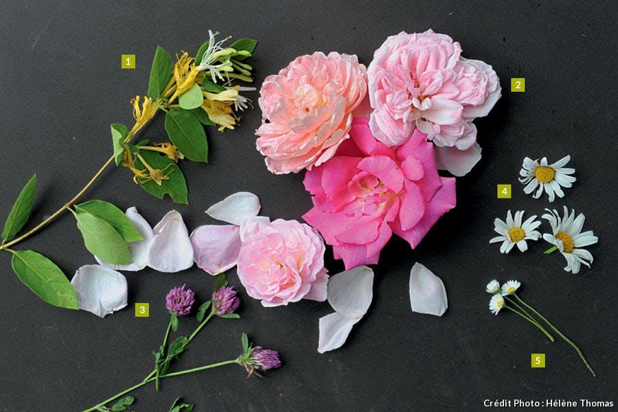 Fleurs aux parfums sauvages