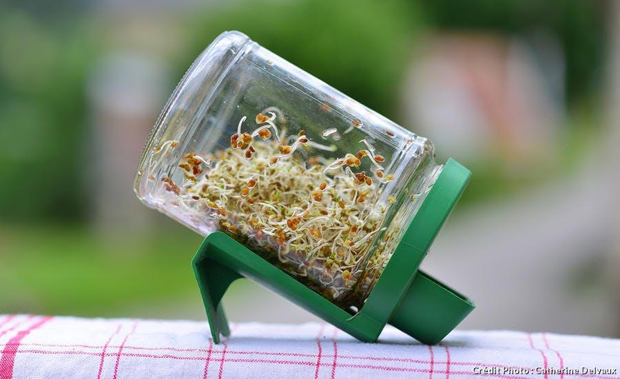 Bocal de graines germées
