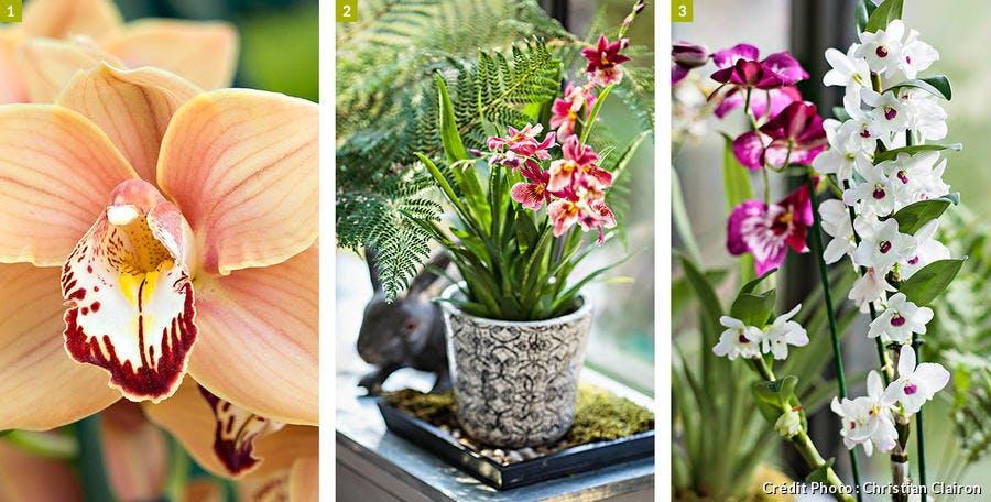 Plusieurs variétés d'orchidées
