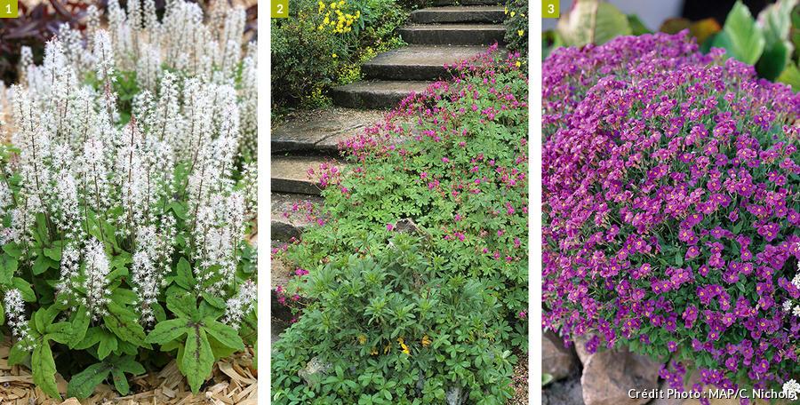 Plantes de bordure