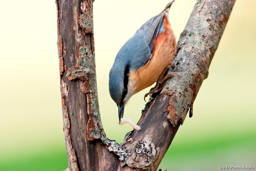 oiseau mangeant sur un arbre mort