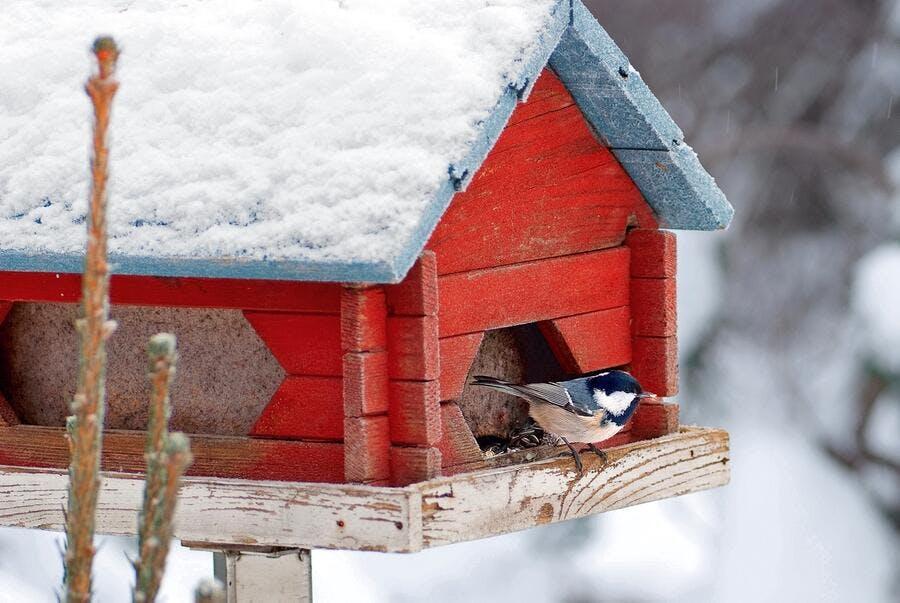 nichoir recouvert de neige