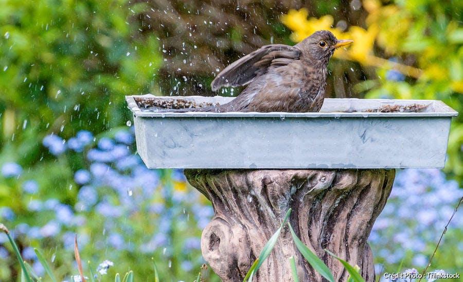 dj111_oiseaux_soucoupe_eau_thinkstock.jpg