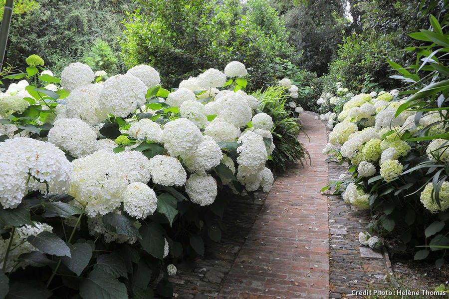 Jardin Villa della Pergola 2