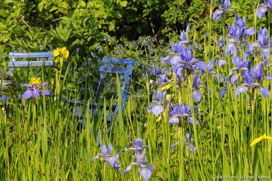 Jardin des Lianes, iris d'eau